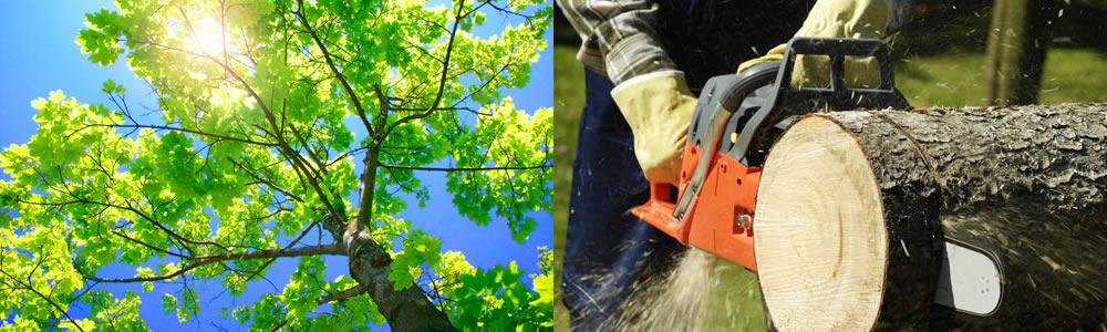 Tree Services Haltom City